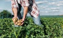Emergenza Covid, Sos manodopera in agricoltura