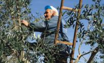 Cia Umbria: pensioni agricole, più basse del 55% rispetto agli altri settori lavorativi